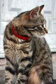 Кошка — Stock Photo