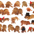 Many dachshund puppies — Stock Photo #1880656