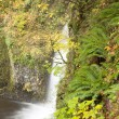 Stock Photo: Portland Multnomah Falls