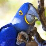 Parrot — Stock Photo #2630374