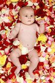 バラの花びらで小さな男の子 — ストック写真