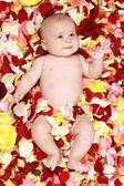 Beautiful boy in a rose plants. — Stock Photo