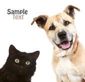 Kedi ve köpek yakın çekim portre. — Stok fotoğraf