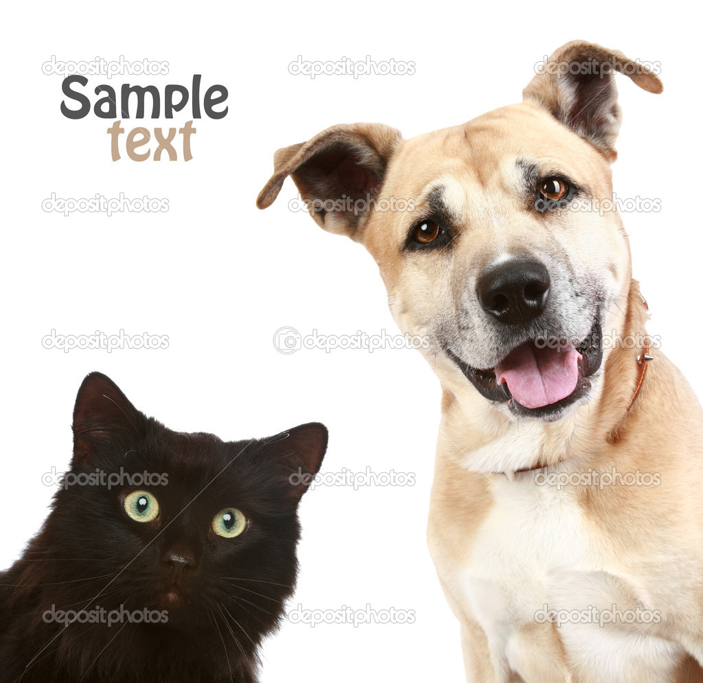 Close-up portrait of a cat and dog. Isolated on white background  Stock Photo #2531556