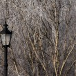 Stock Photo: Lamp in winter