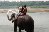 Filler nepal — Stok fotoğraf