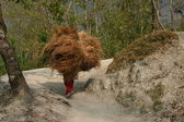 Nepal Porters — Stock Photo