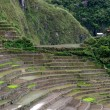 Stock Photo: Batad rice fields Philippines
