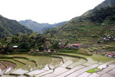 Batad rice fields Philippines — Stock Photo
