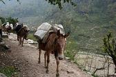 Nepal trekking — Stockfoto