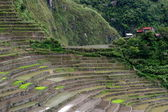Philippines Rice Fields — Stock Photo