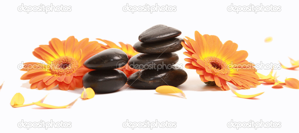 Orange gerber daisy and stones isolated on white — Stock Photo #1775786