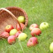 Basket on meadow - Stock Photo