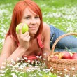 Apple basket - Stock Photo