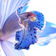 Blue flower — Stock Photo #1810736