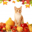 Fluffy autumn cat — Stock Photo