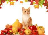 Fluffy autumn cat — Stock Photo