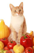 Vegeterian cat — Stock Photo
