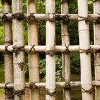 Protection natural bamboo — Stock Photo
