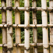 Protection natural bamboo — Stock Photo #1801716
