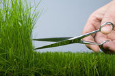 Mower & grass — Stock Photo
