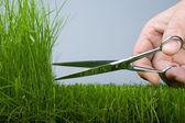 Mower & grass — Stock Photo