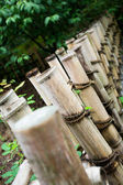 Natural bamboo — Stock Photo
