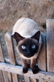 Cat — Fotografia Stock