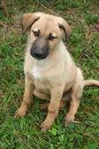 Een schattige puppy — Stockfoto