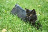 Black kitten — Stock Photo