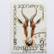 Stock Photo: Zoo, postage, USSR