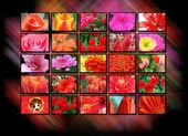 Color multidisplay tv monitors — Stock Photo