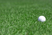 Green grass and golfball — Stock Photo