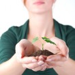 Hands of woman and green sprout — Stock Photo