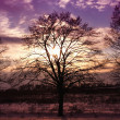 Stock Photo: Sunset and tree