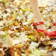 Royalty-Free Stock Photo: Foliage and red shoes