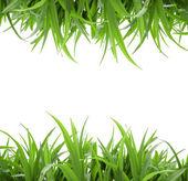 Isolierte grüne gras — Stockfoto
