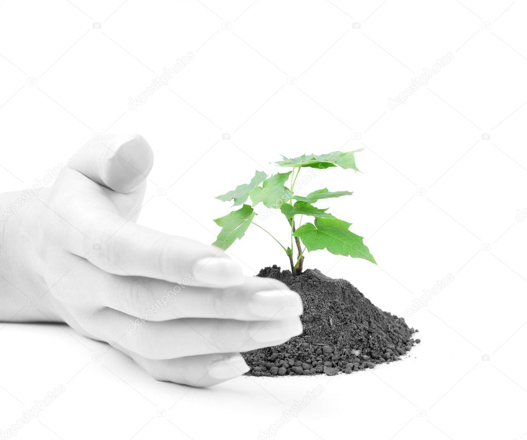 Hand of young woman protect a green sprout — Stock Photo #2575432