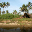 Coconut palms and shelter — Stockfoto