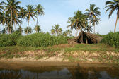 Coconut palms and shelter — Stock Photo