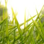 Green grass sunset — Stock Photo #1821304