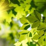 folhas verdes com raio de sol — Foto Stock