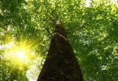 Deep forest — Стоковое фото
