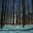 Stock Photo: Winter forest at night time