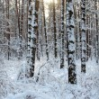 Winter trees — Stock Photo #1852464