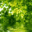 Green leaves reflecting in the water — Stock Photo #1859625