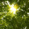 Sun in deep forest — Stock Photo #1859965