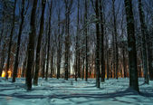Winter forest at night time — Stock Photo