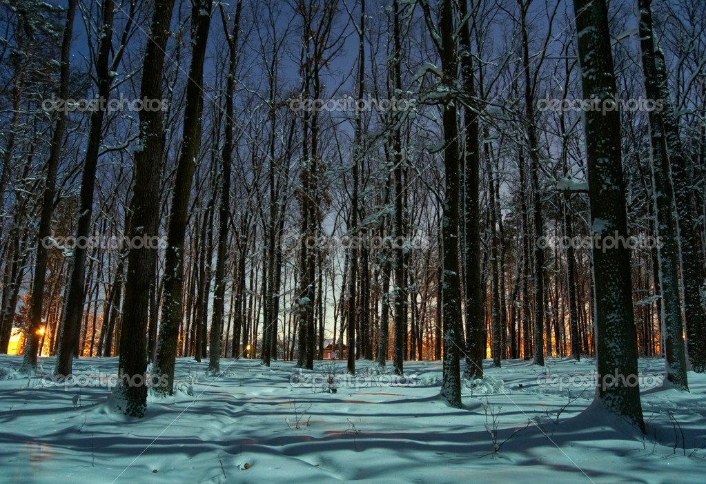Winter forest at night...