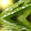Raindrops on green grass — Stock Photo